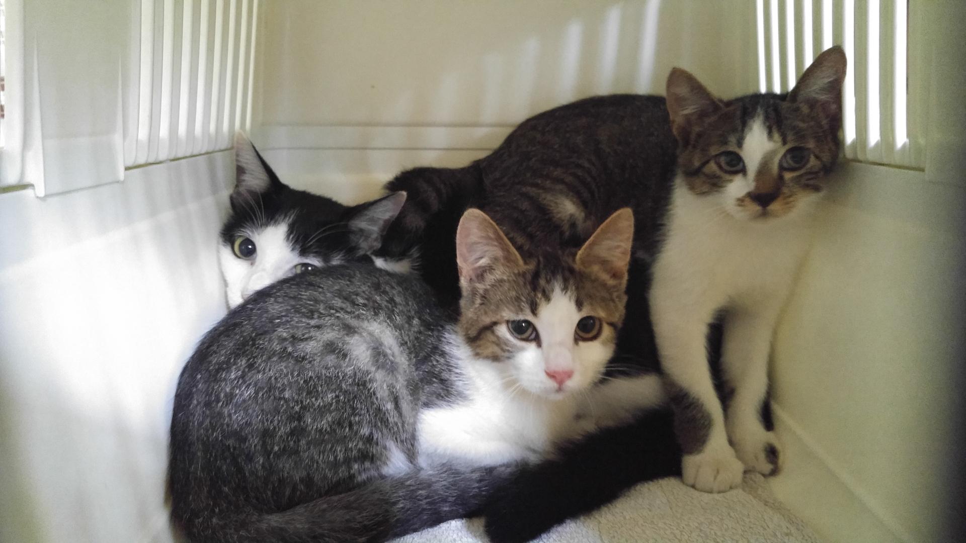 まずは、保健所・動物愛護センターに収容される猫を減らす