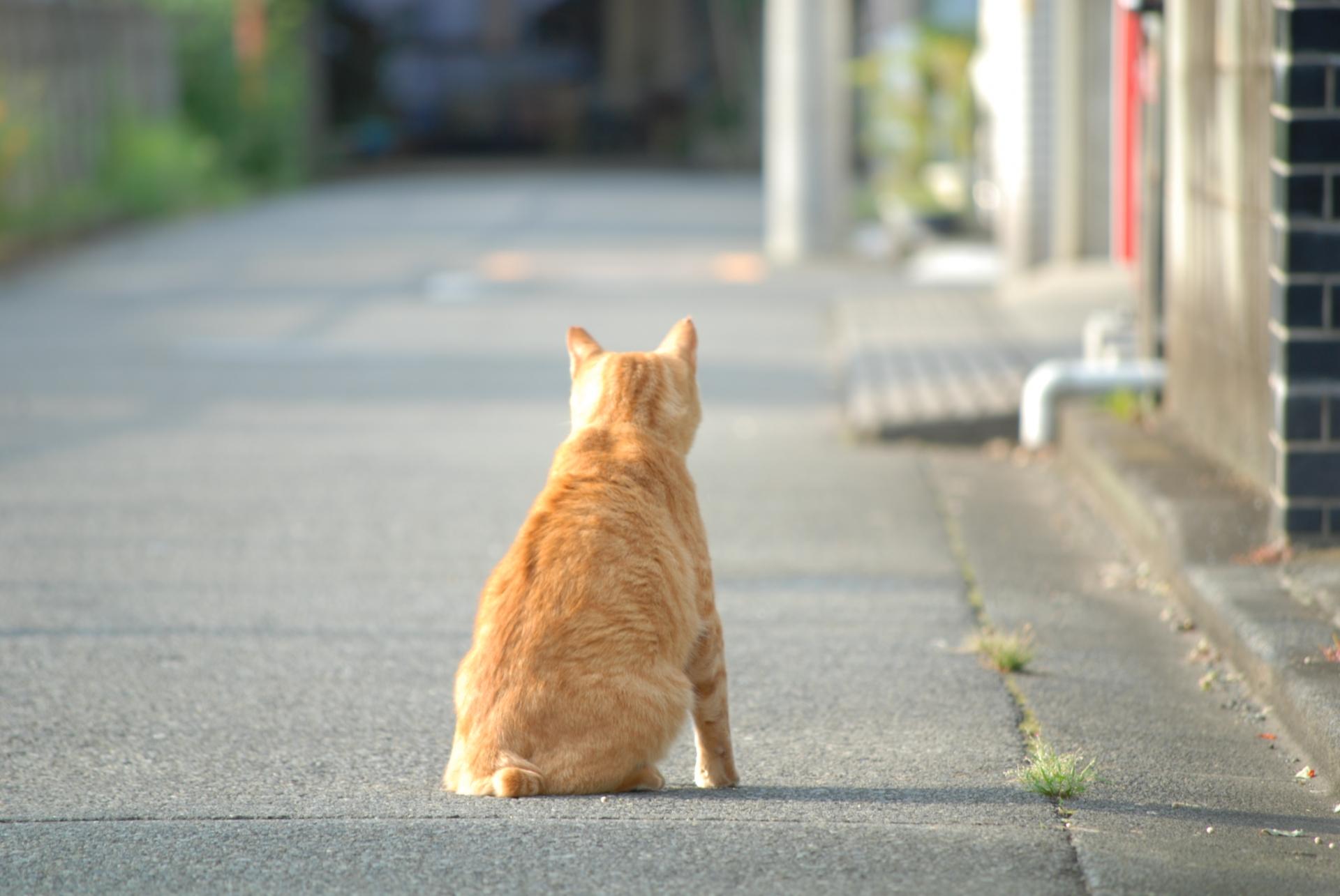 どうしても猫ちゃんを飼えなくなってしまったら?