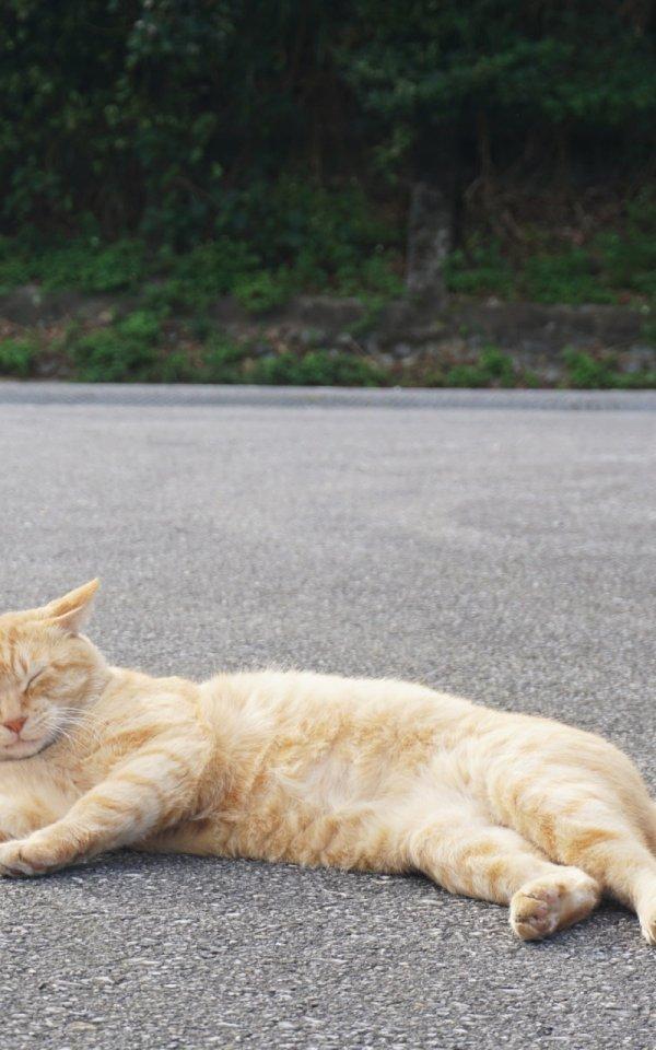保護した野良猫が弱っていたときの応急手当とは?【動物病院に行けないとき】