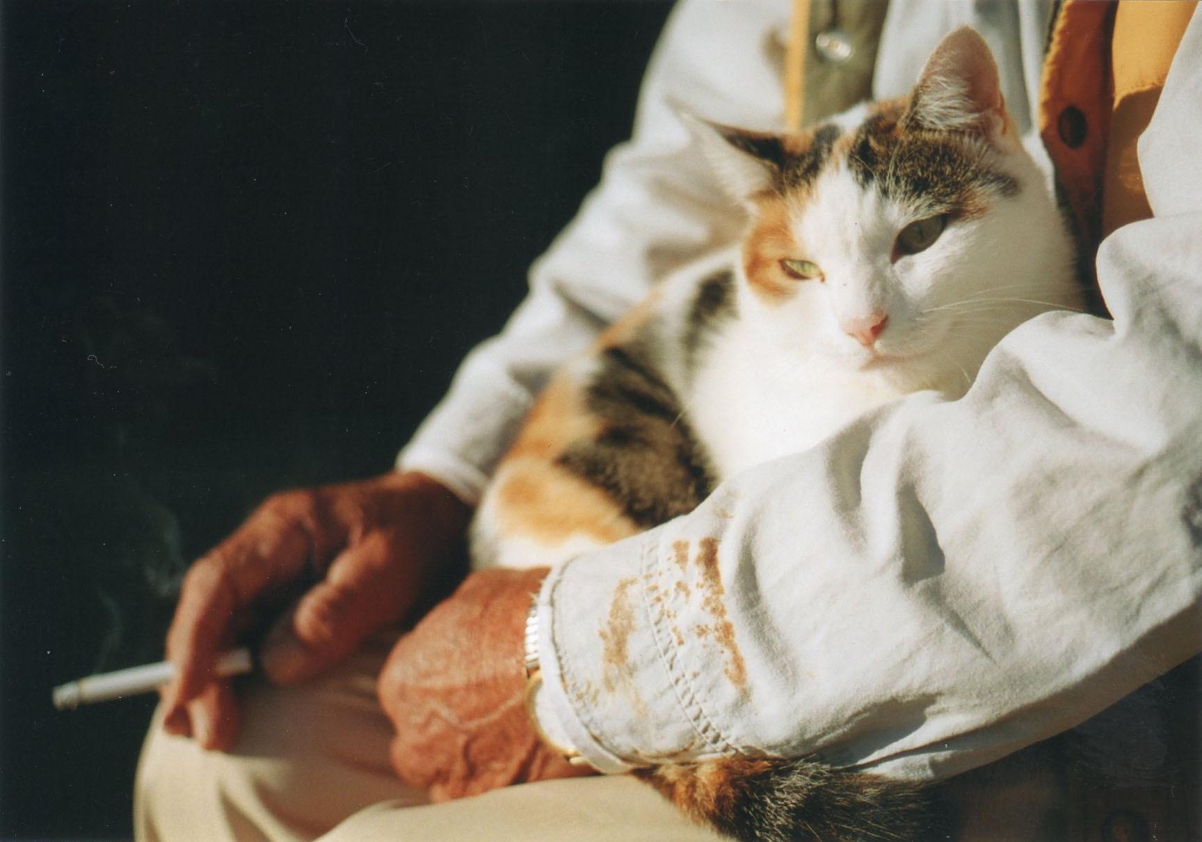 まとめ 野良猫と共生するためのTNR