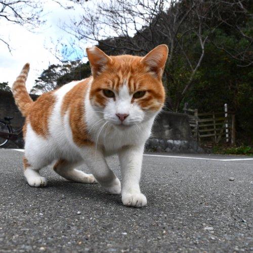 野良猫を捕獲!保護した猫を飼う前にやるべきこと【まずは動物病院に行く】