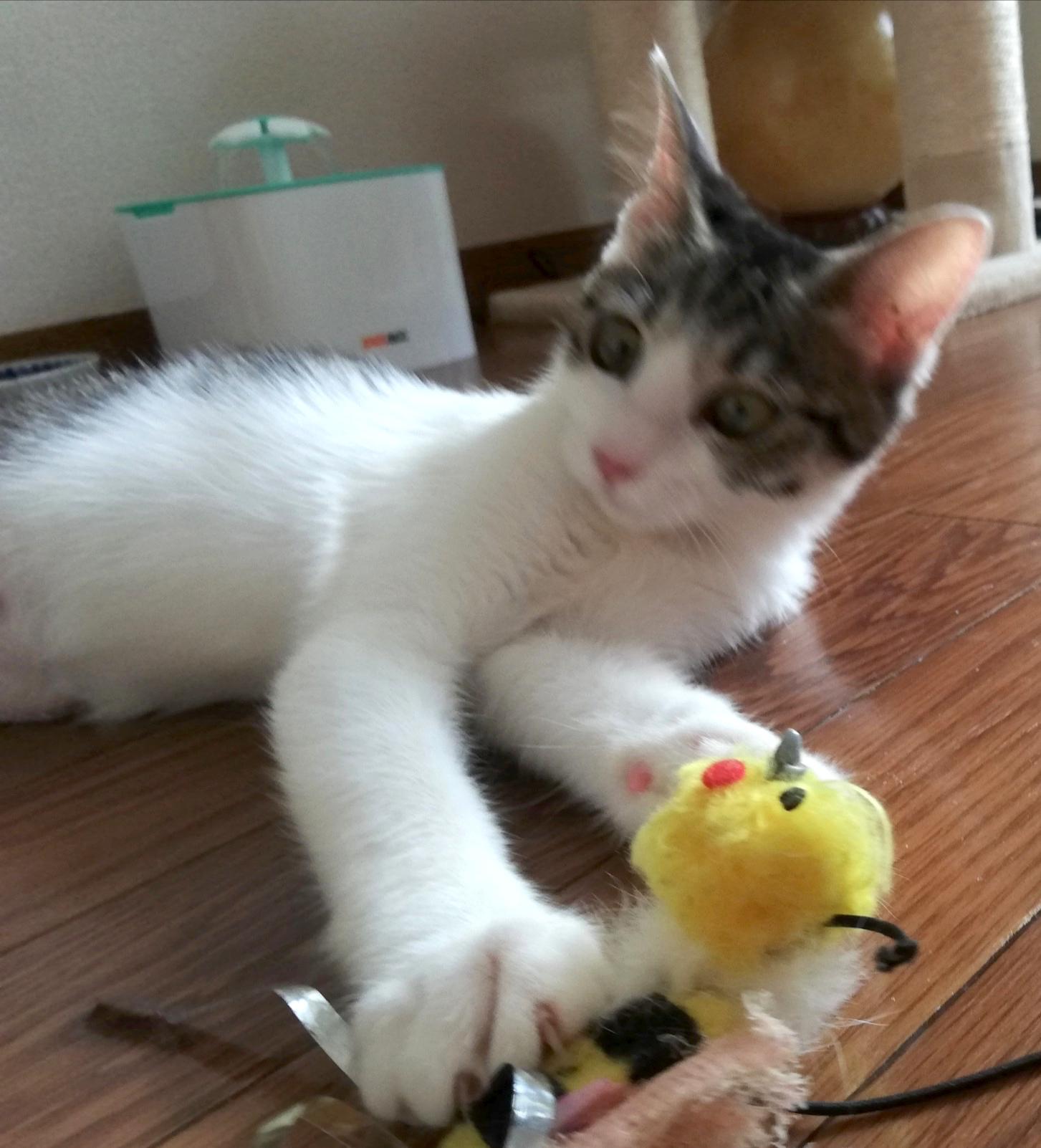 もう一度、猫と一緒に幸せに暮らしたい