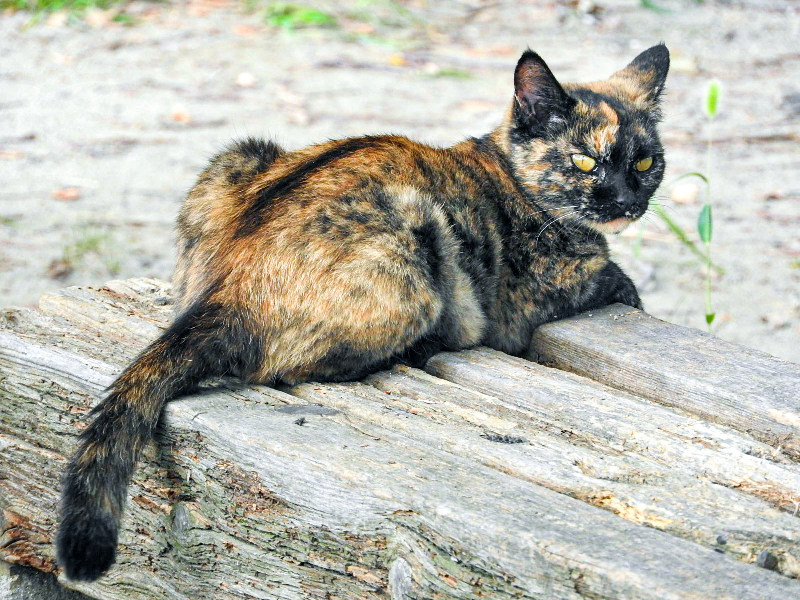 野良猫が心配で保護してしまった、でも飼えない…。