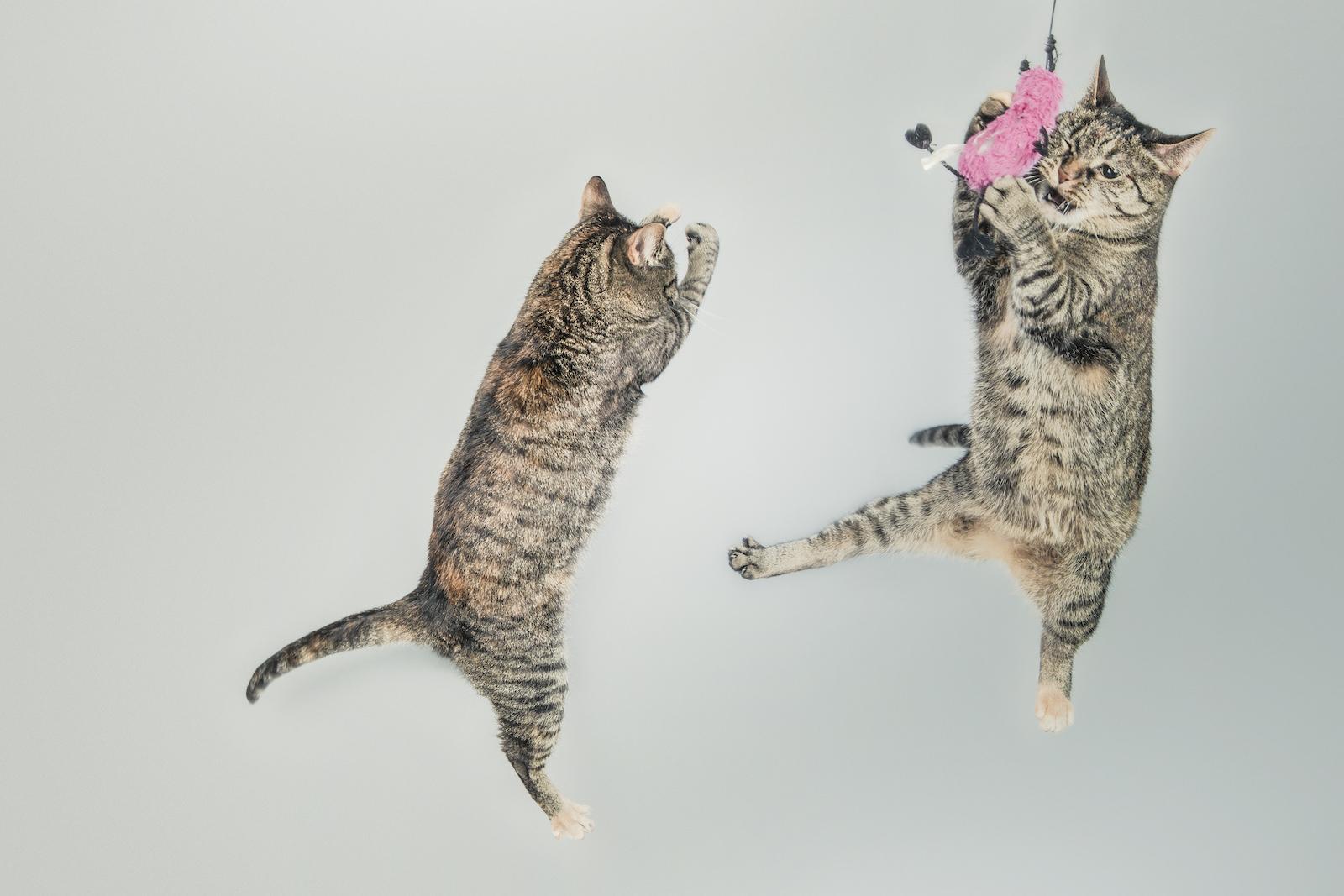 猫の里親募集サイトで保護猫を探す方法