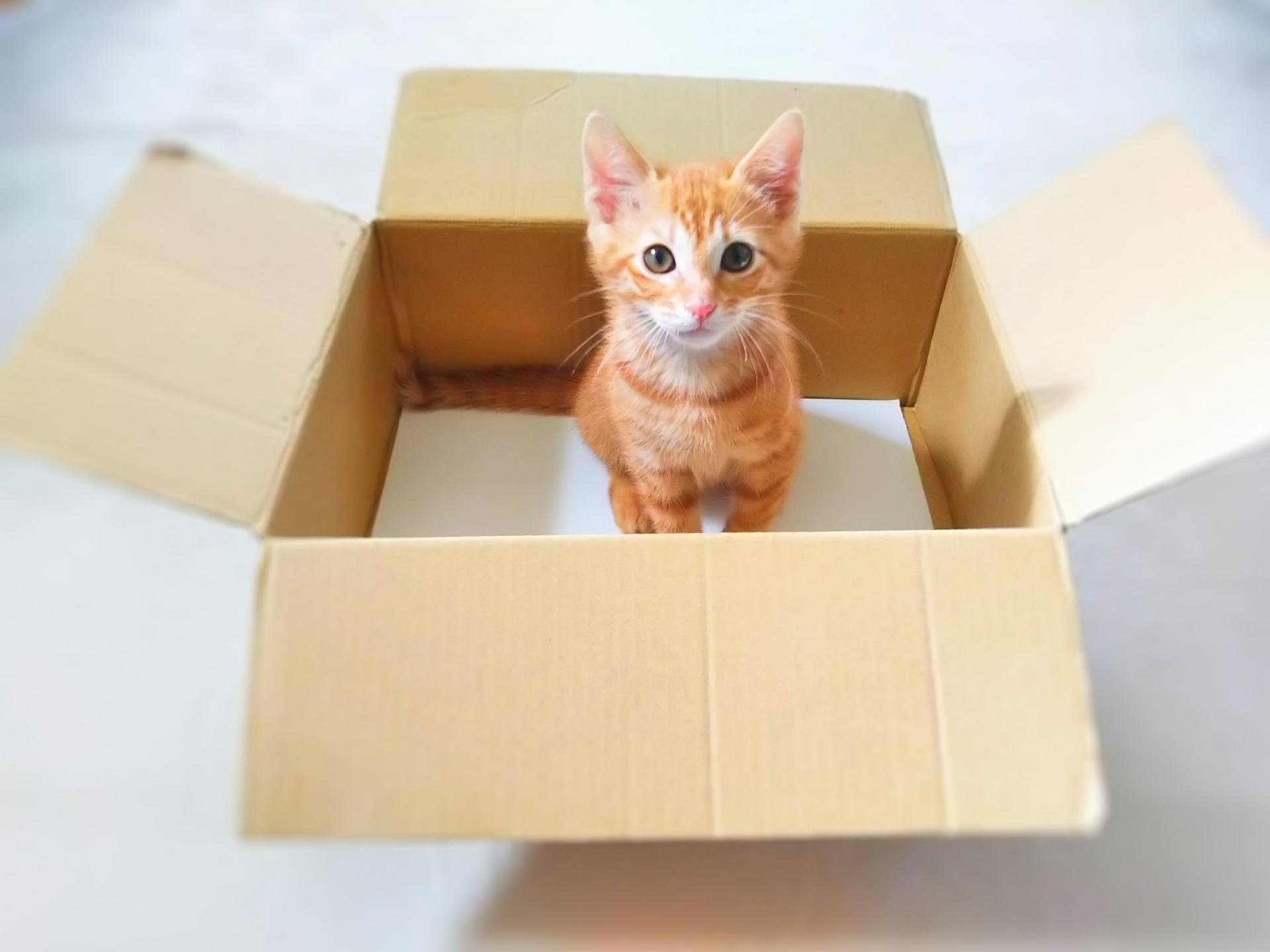 【必読】保護猫の里親になる前に知っておきたい7つの心構え