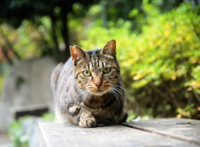 猫のTNRってなに?【野良猫の不妊去勢手術のこと/地域猫活動】