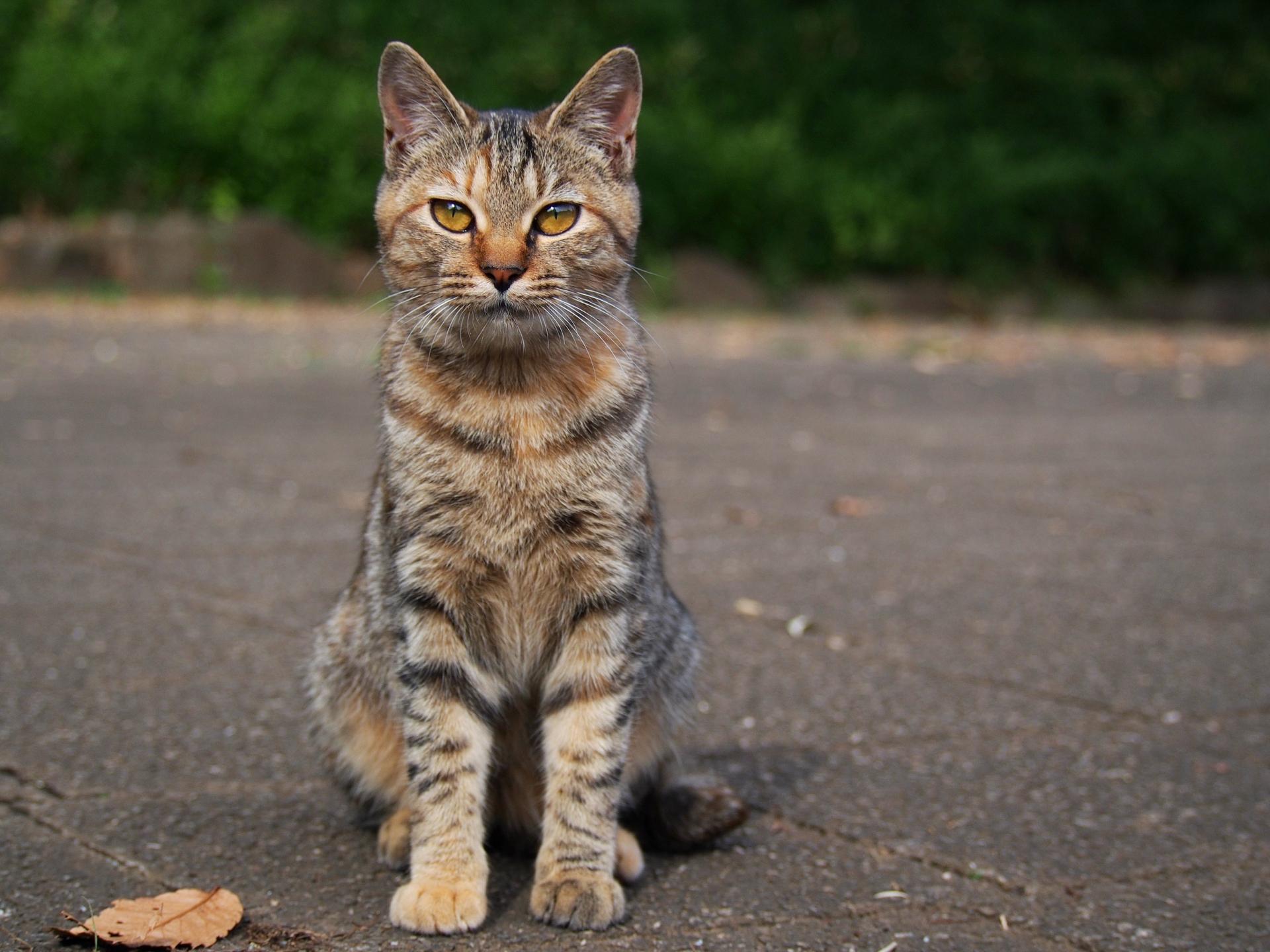 猫の里親になる前に知っておきたい7つの心構えとは