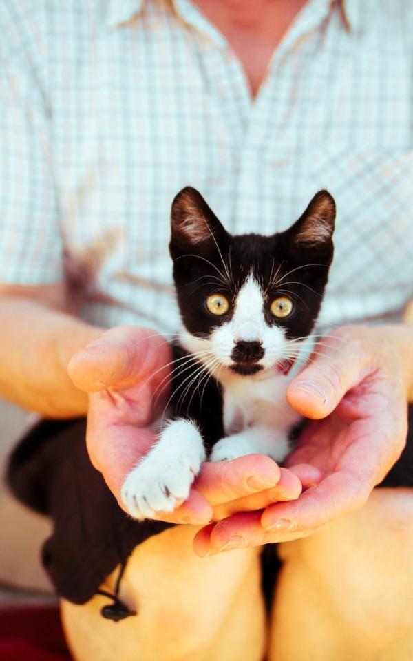 猫の里親募集サイトで保護猫を探す方法【保護団体の評判も調べておく】
