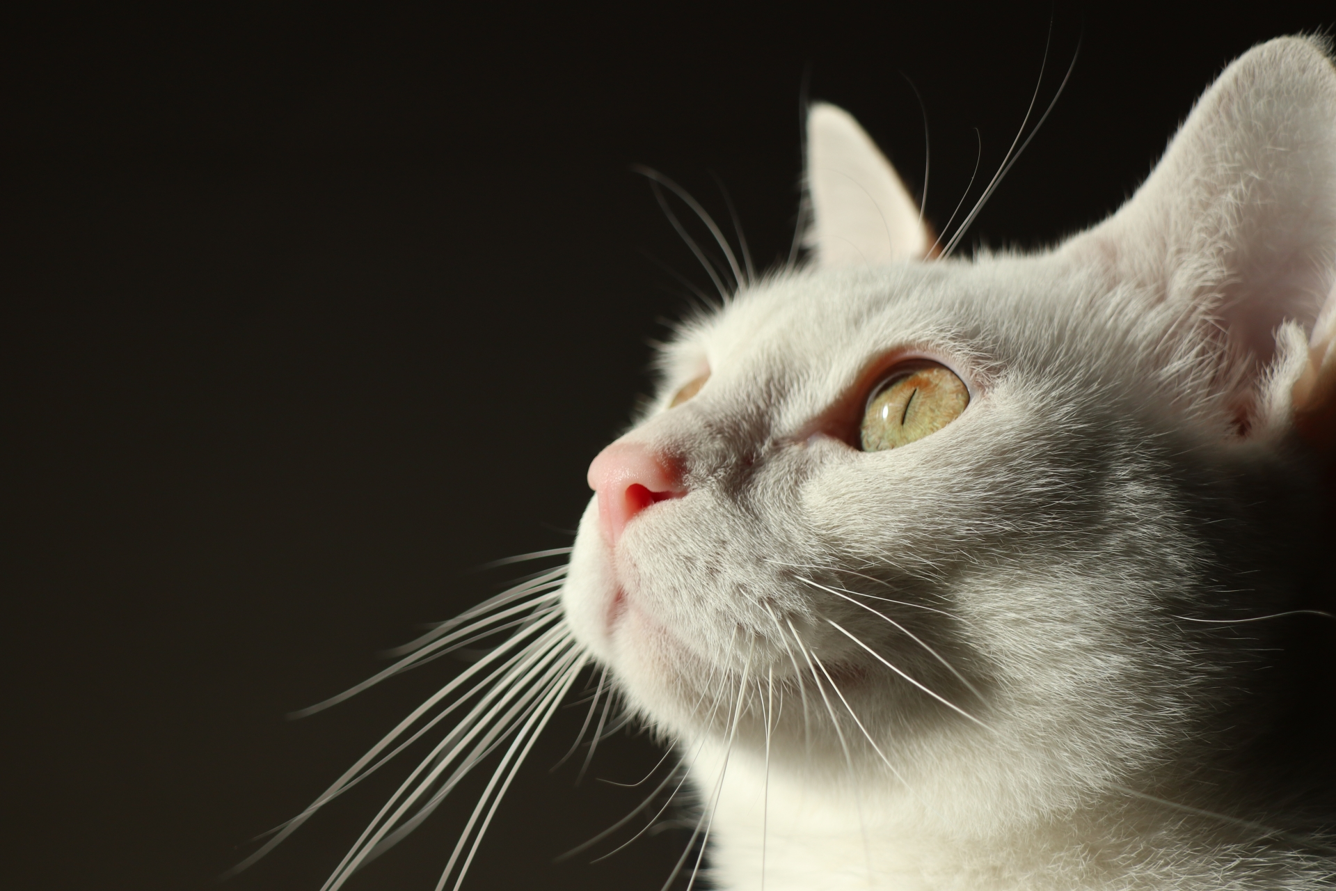保護猫の里親になれる人の条件とは?【覚悟が必要です】