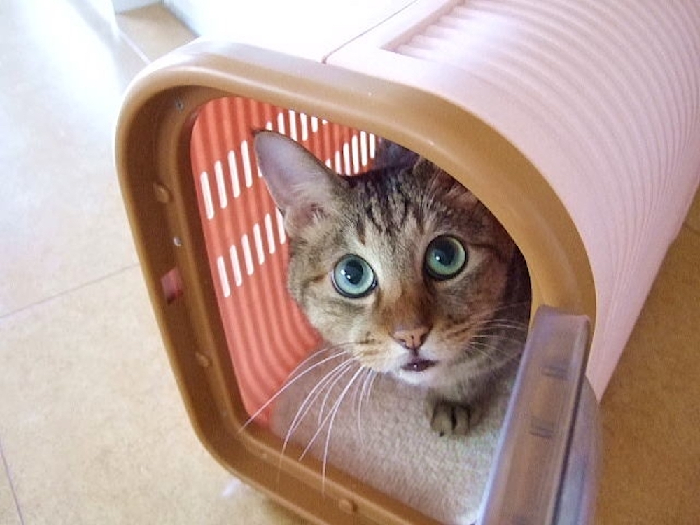 やむを得ない事情で愛猫が飼えなくなったときの里親の探し方