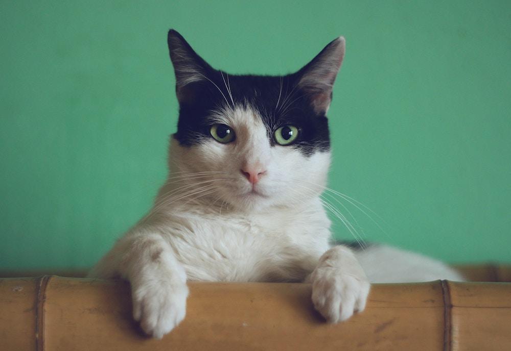 猫の里親になれる人の条件とは【覚悟が必要です】