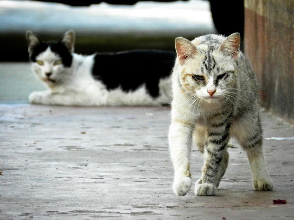 野良猫を捕獲!保護した猫を飼う前にやるべきこと