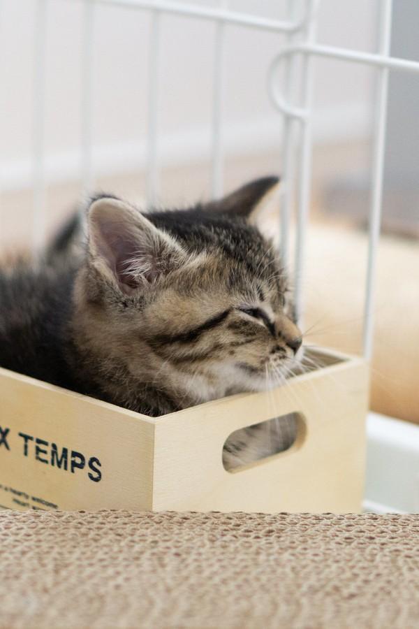 猫の里親になる方法とは【ペットショップで猫を買う前に見る】