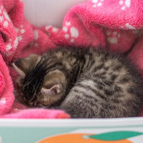 猫を飼えないけど野良猫を保護してしまったら【里親を探そう】