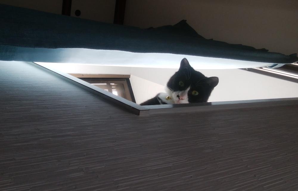 猫の生涯を幸せにしてあげたい