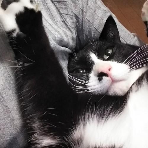保護猫にとって我が家に来ることが幸せなのか、与える愛は自己満足なってはいけない【猫の里親体験談/埼玉】