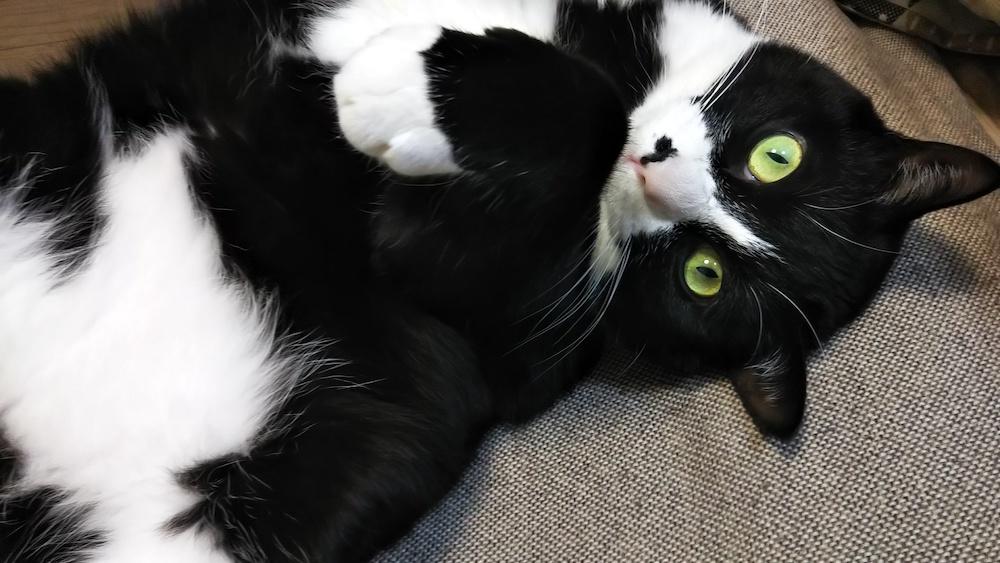 猫を本当に幸せにできるのか自問自答する日々