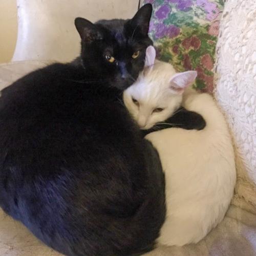 【猫の里親体験談】「ペットショップで命を買うという選択肢はなかった」そして猫に癒され、とにかく幸せな毎日へ