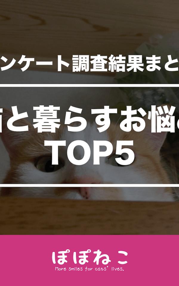 猫を飼うお悩みランキングTOP5!飼い主調査でわかった猫の住環境の悩みの本音とは?
