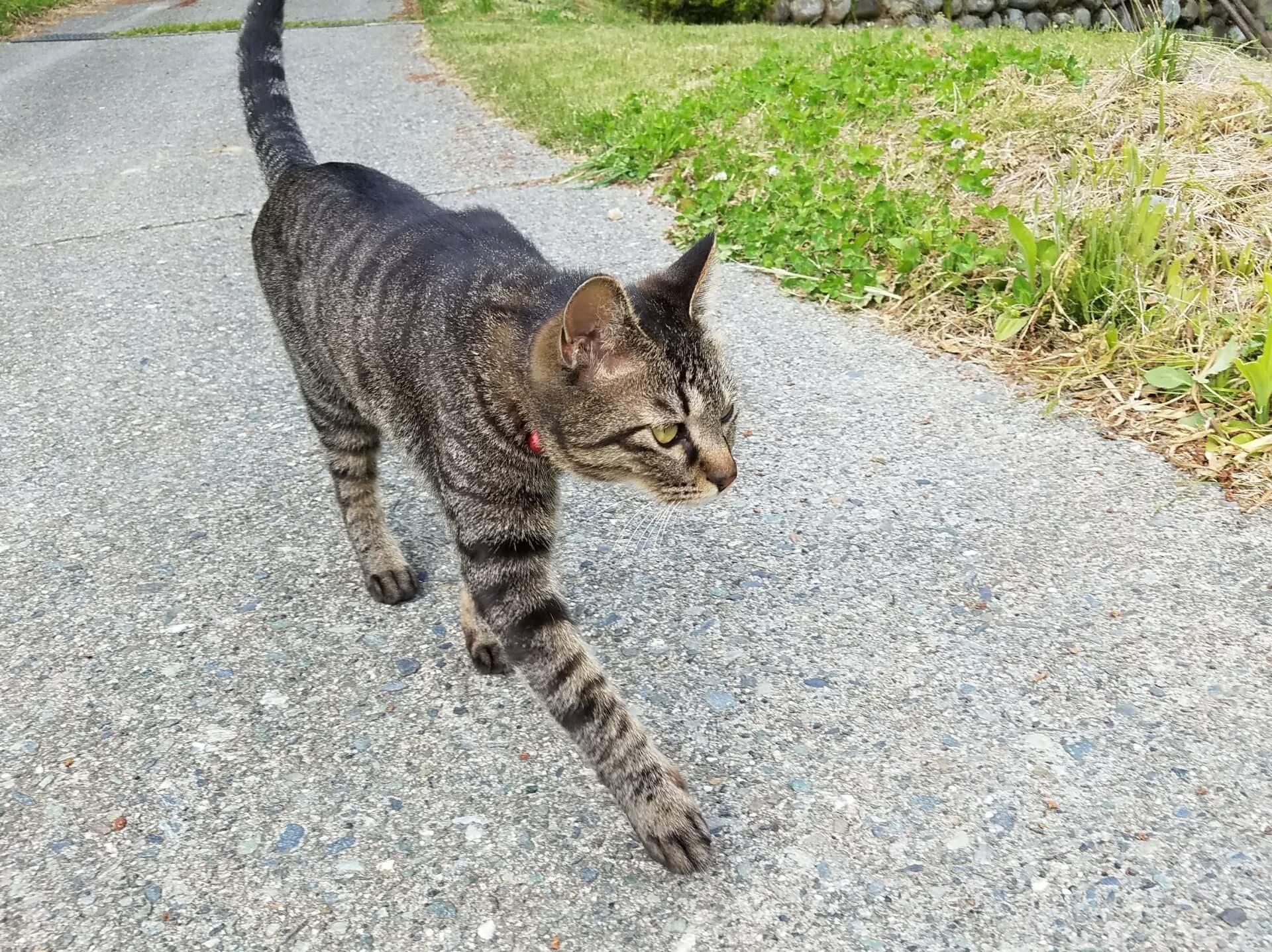 猫の飼い主のお悩みランキング1位は「脱走」