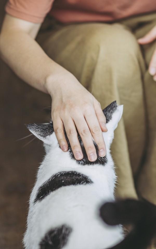 生活保護を受給していても猫を飼えるのか【飼えます/助成金もアリ】
