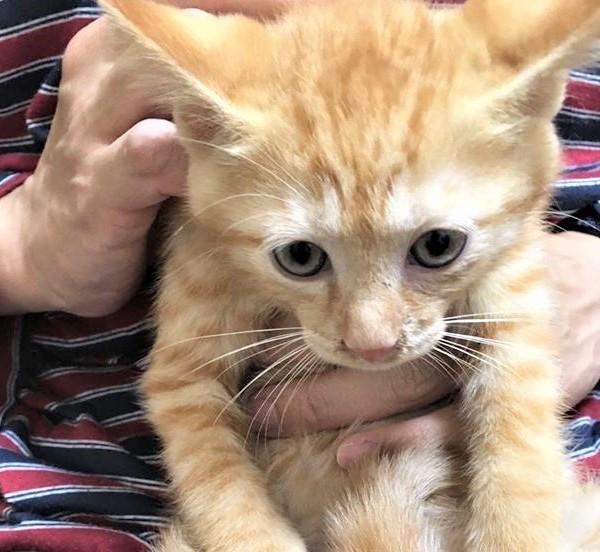 あなたも一緒に、保護猫を家族に迎え入れてみませんか?
