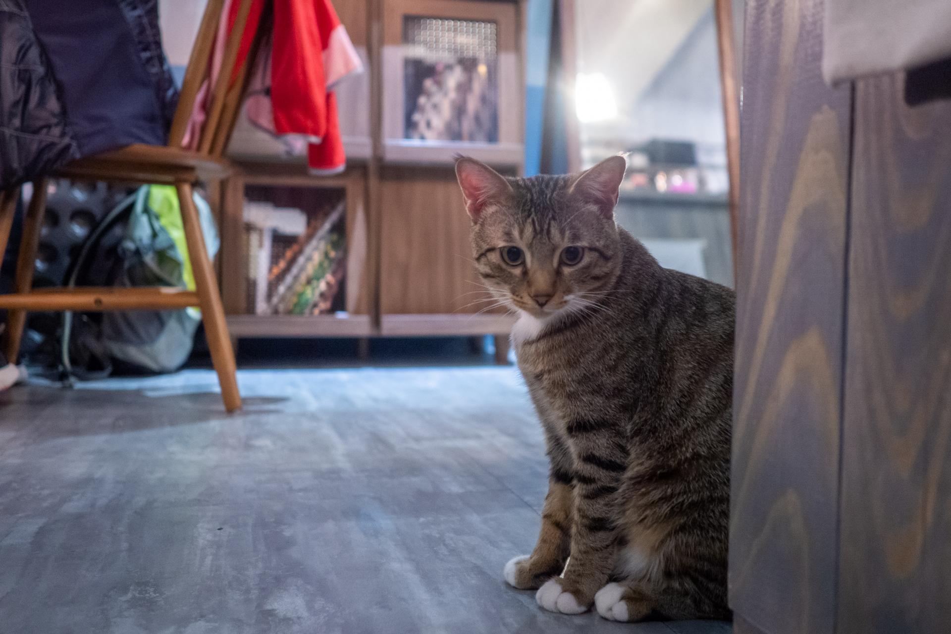 保護猫カフェとはどんな場所?