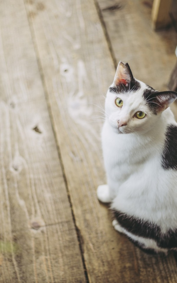 自分に合う保護猫の選び方とは【猫の個性とあなたの相性】