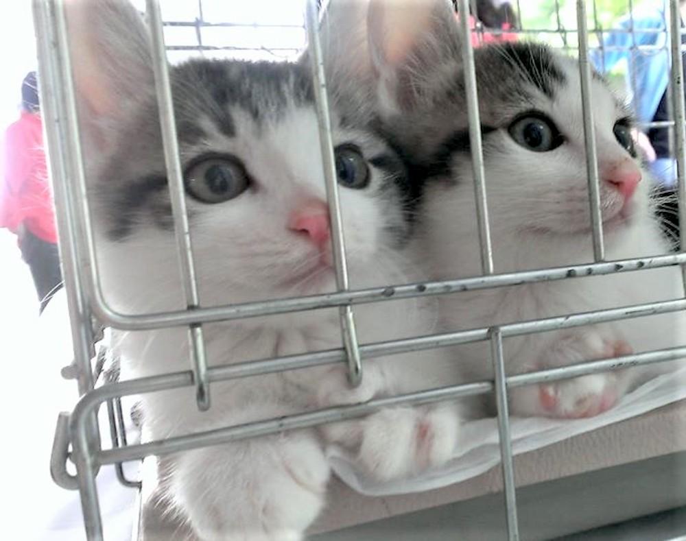 保護主から見た保護猫への想い
