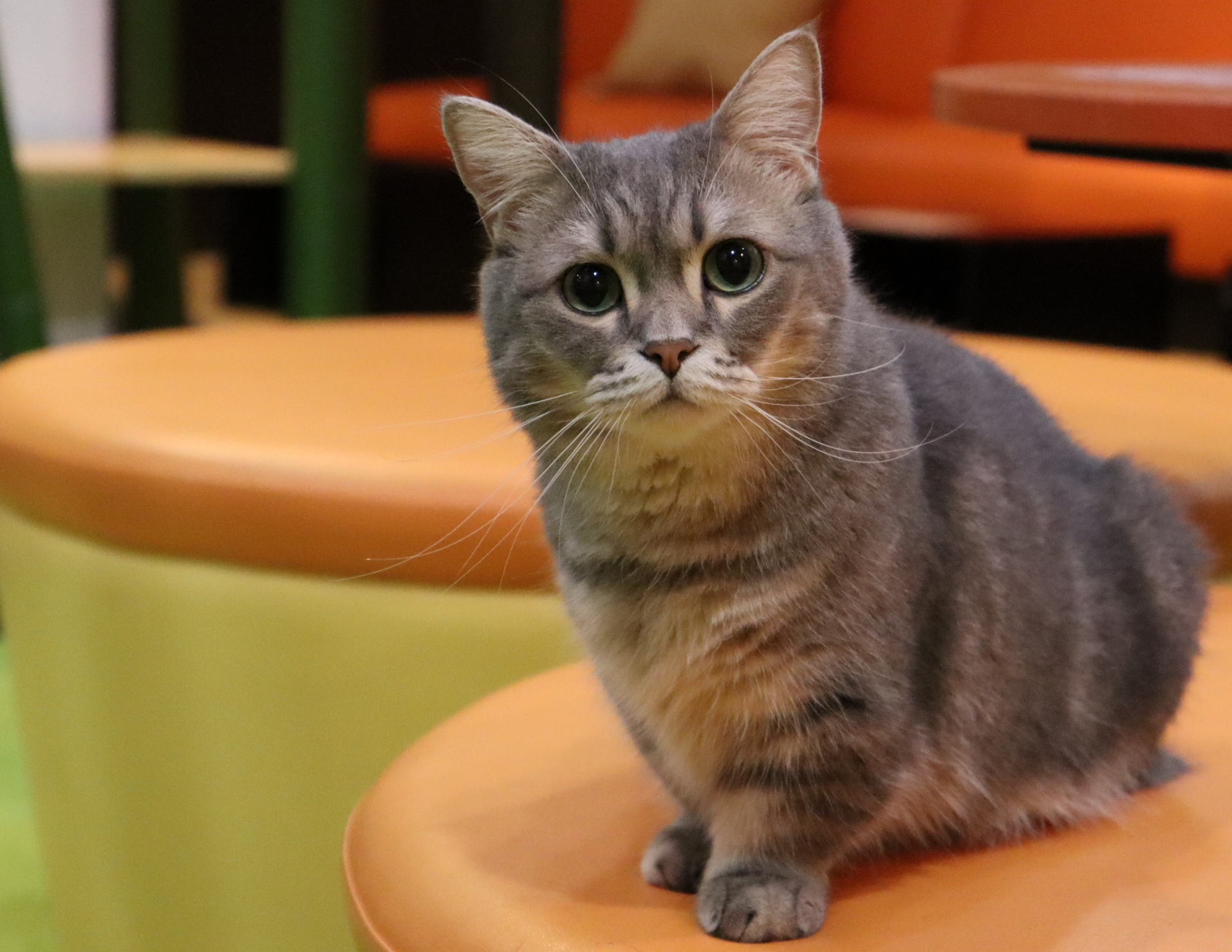 【3】買い物やお出かけで猫ボランティア