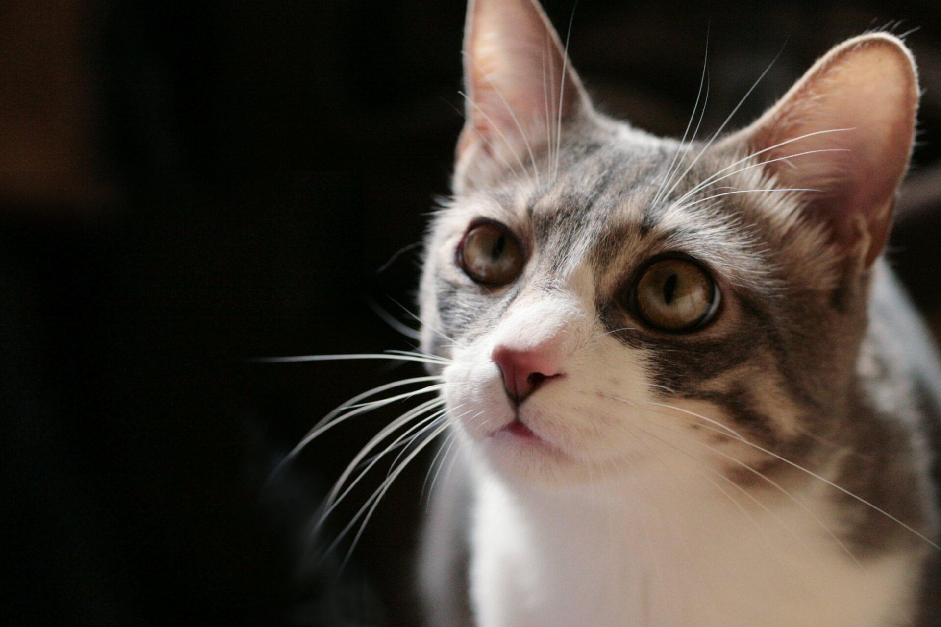 衝撃!殺処分される猫の2割は飼い主の飼育放棄という事実【避妊・去勢手術は殺処分を防ぐ】
