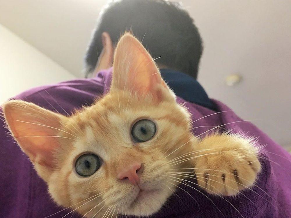 保護猫の譲渡会へ行ってみよう