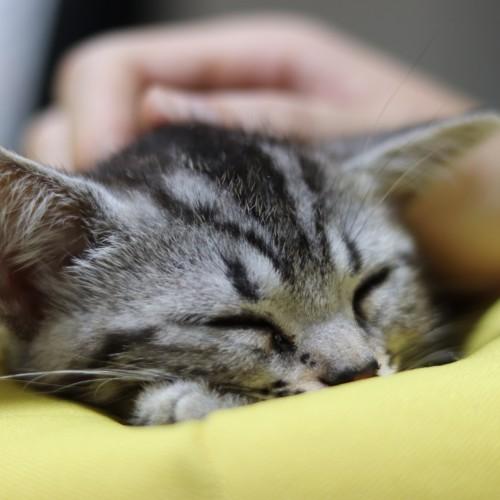 保健所や動物愛護センターの保護猫を引き取る方法【殺処分を水際で防ぐ】