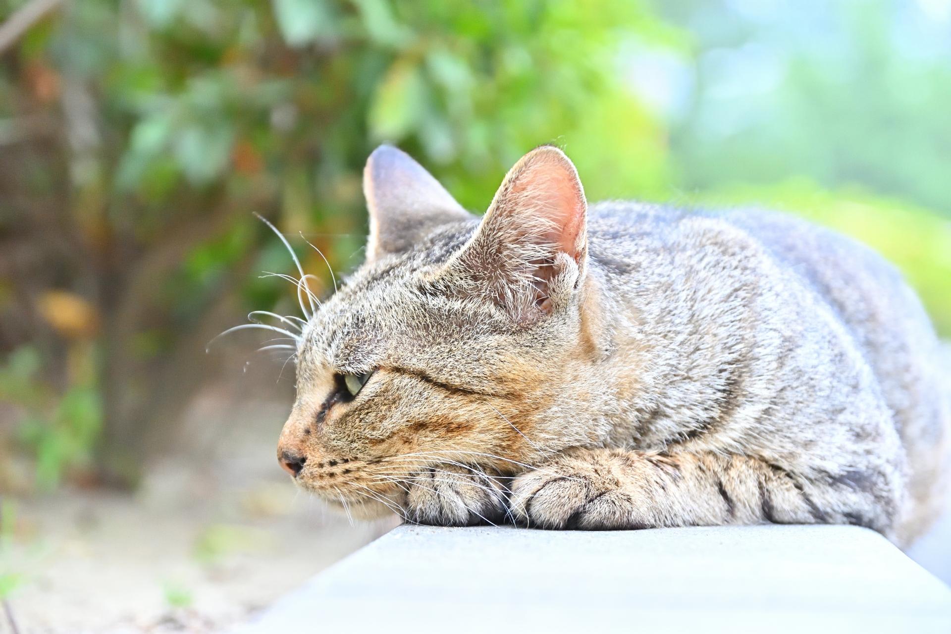 単身者が猫の里親になるための条件とは