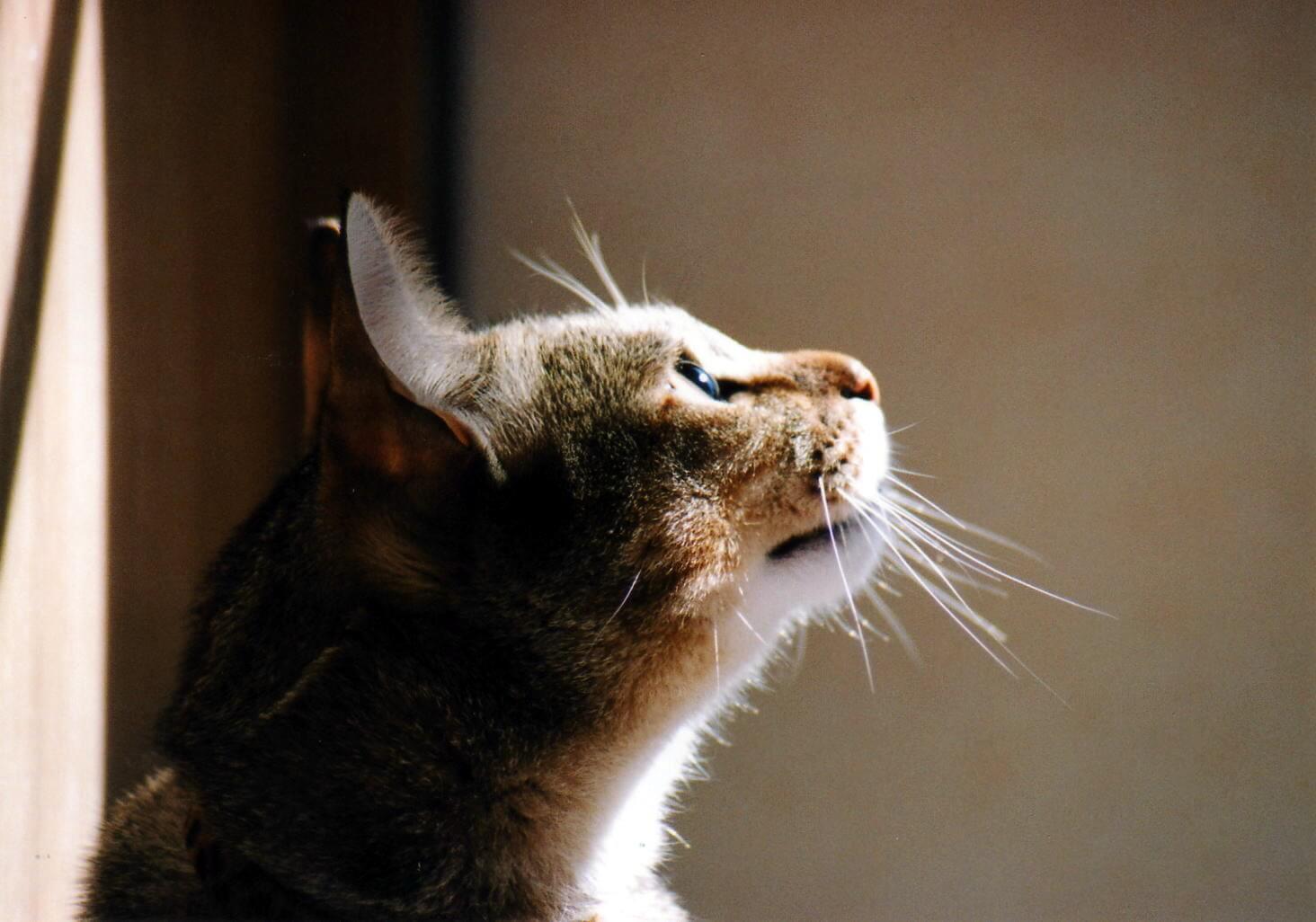 猫の適正飼育を促進するための助成金もある