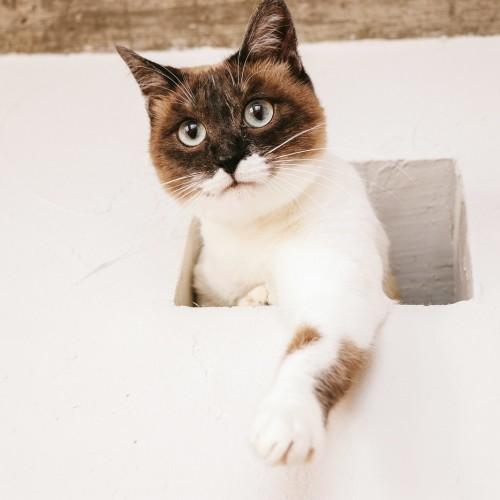 猫共生型賃貸住宅が増えている理由とは?【猫飼育可物件は少ない】