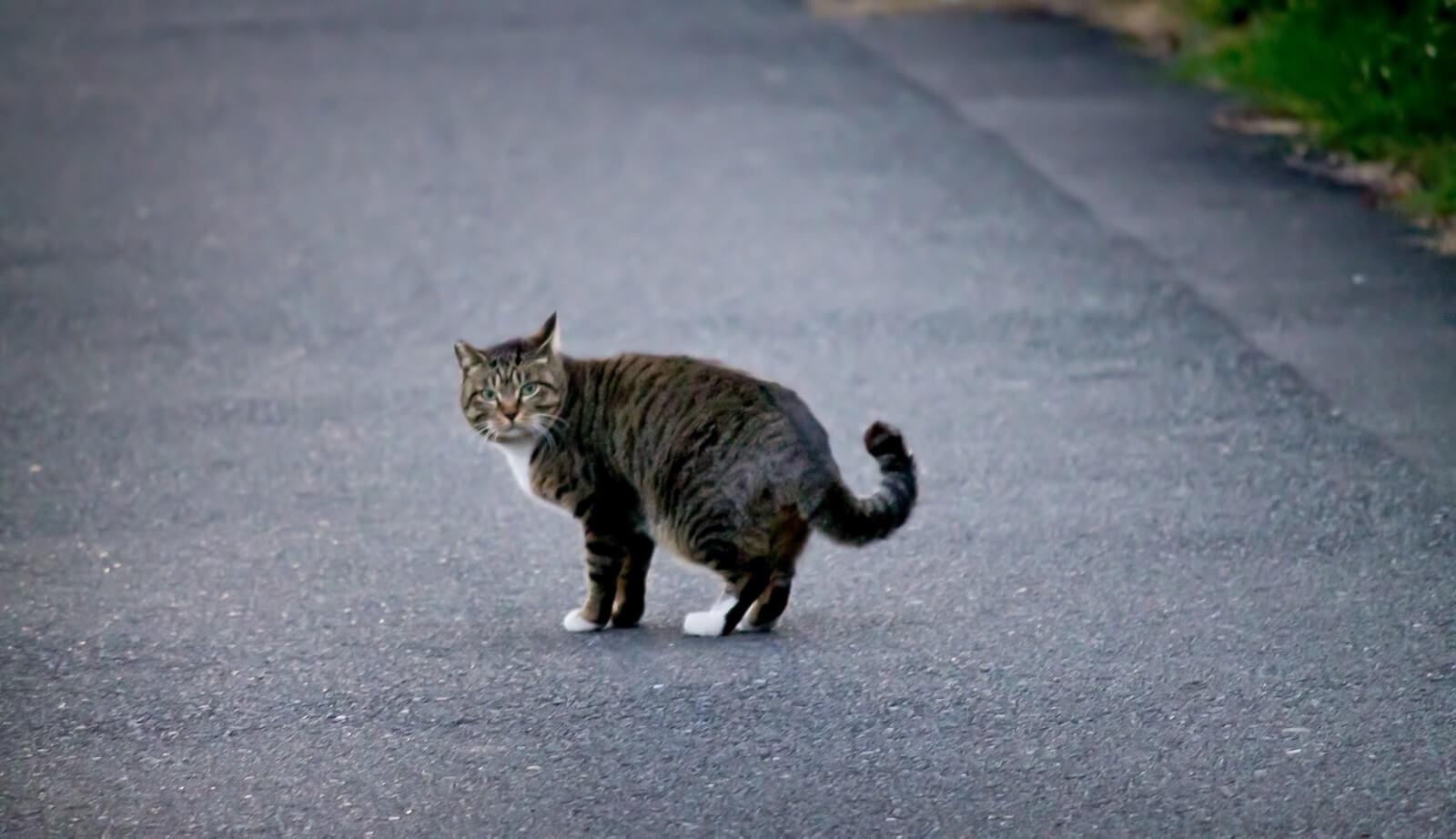 猫が脱走してしまったときの対処法
