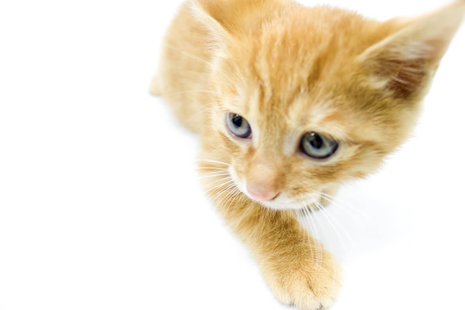 猫と幸せに暮らすための避妊・去勢手術