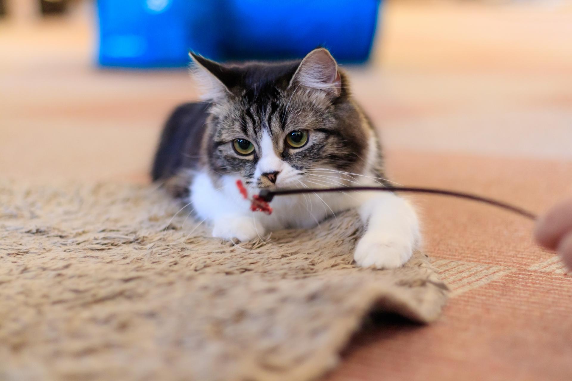 保護猫カフェは保護猫と里親をつなぐ場所