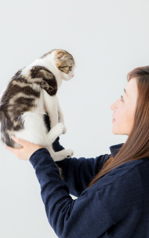 単身者でも猫の里親になれるのか?【単身の男性・高齢者は断られることが多い】
