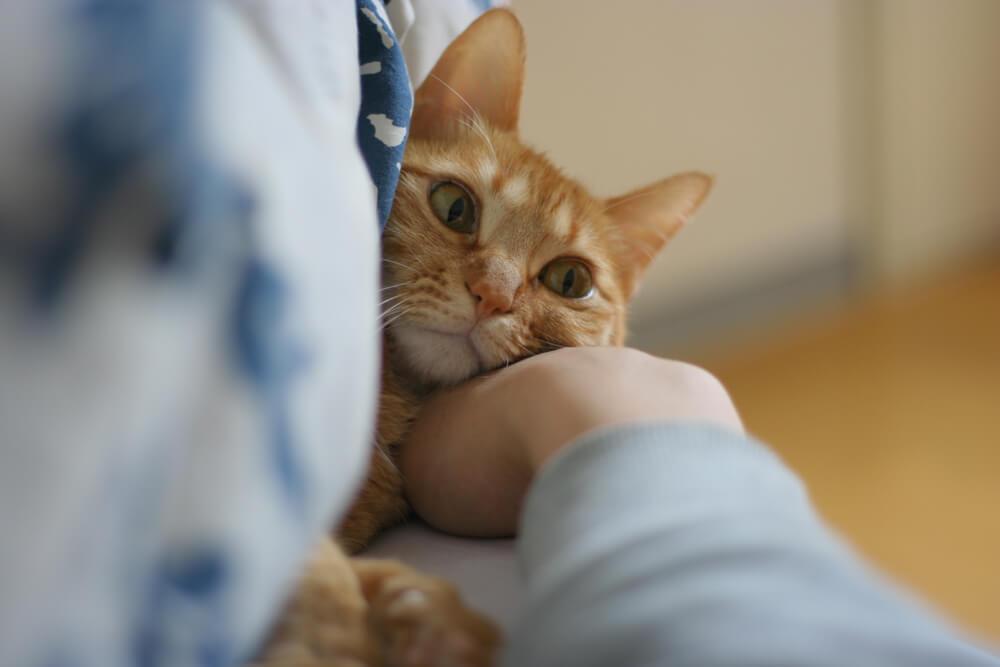 猫の避妊・去勢手術が殺処分を防ぐ