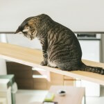 猫ちゃんの本能を満たす設備