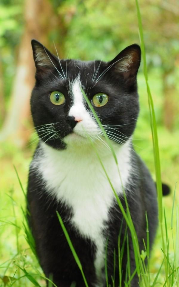 猫を飼えない人でもできる猫ボランティア3選【殺処分ゼロに貢献する】