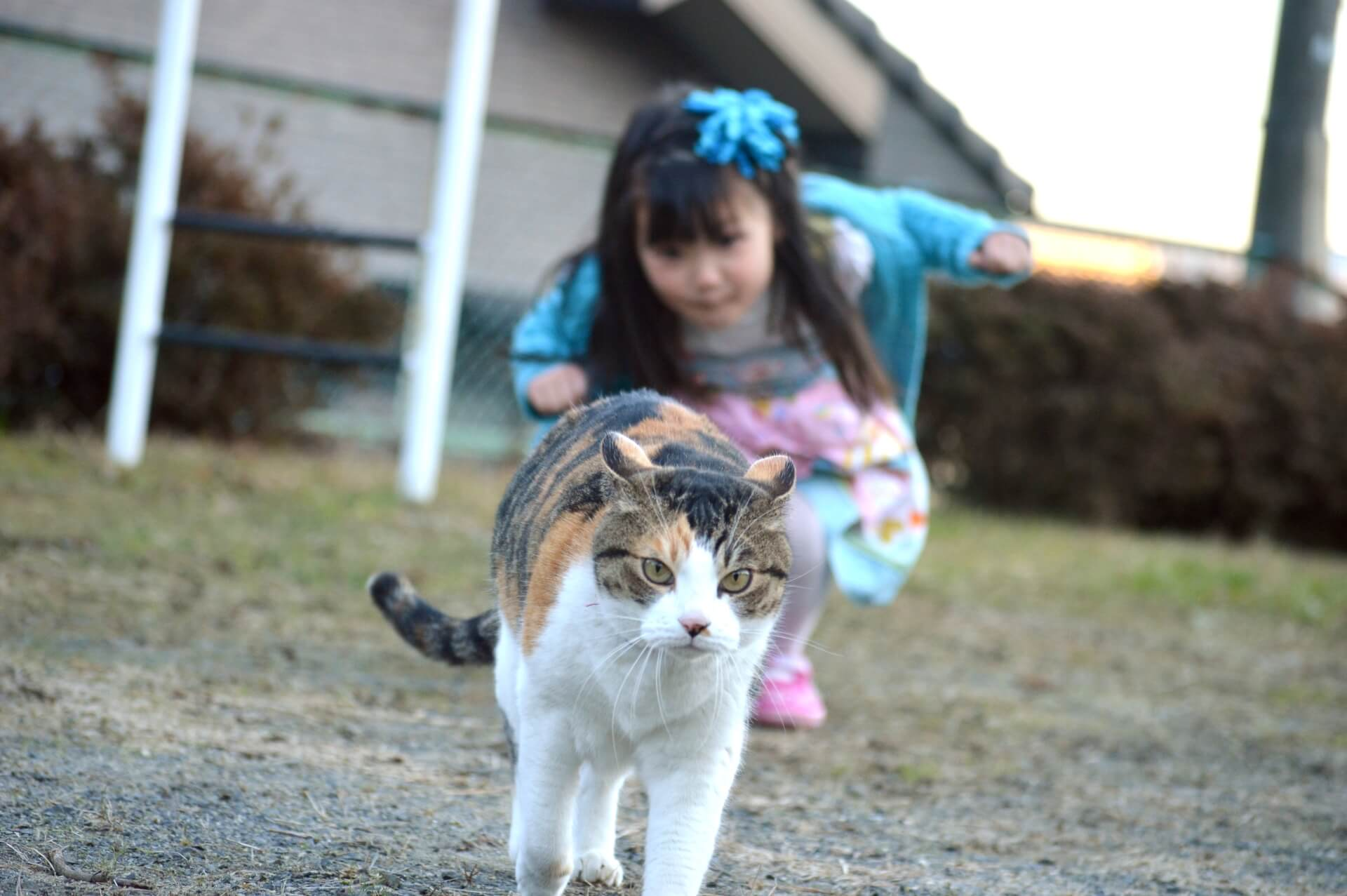 猫の脱走を防止する6つのアイデアとは?【交通事故・殺処分から飼い猫を守る】