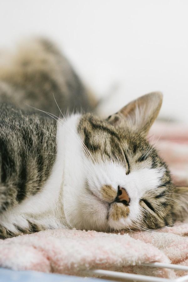 あの超有名企業が積極的に取り組む猫のCSR活動とは【社会貢献活動】