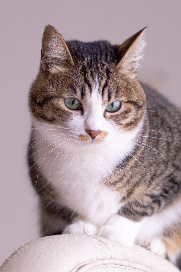 猫ファーストな飼い主になる方法とは?【飼い主の心得】