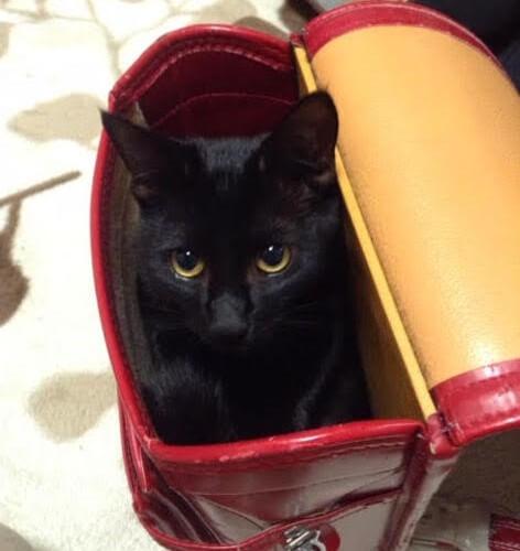 保護猫の「命のバトンを受け継いだ最終ランナー」になること【保護猫の里親体験談/大阪】