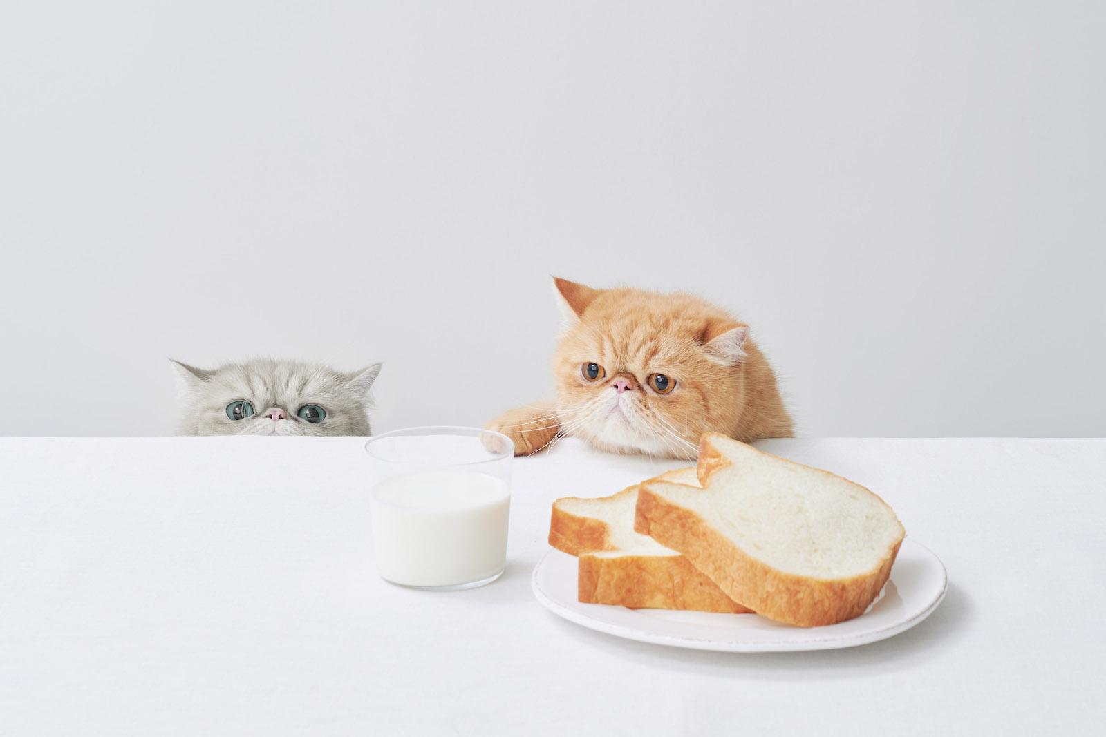 【待望】ねこねこ食パンが通販で買えるようになったので早速買ってみた