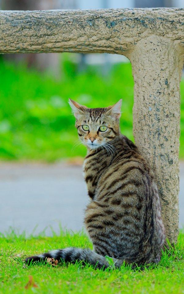 猫にも人にも安全な猫よけ対策【庭や車の野良猫被害を防ぐ猫よけグッズとは?】