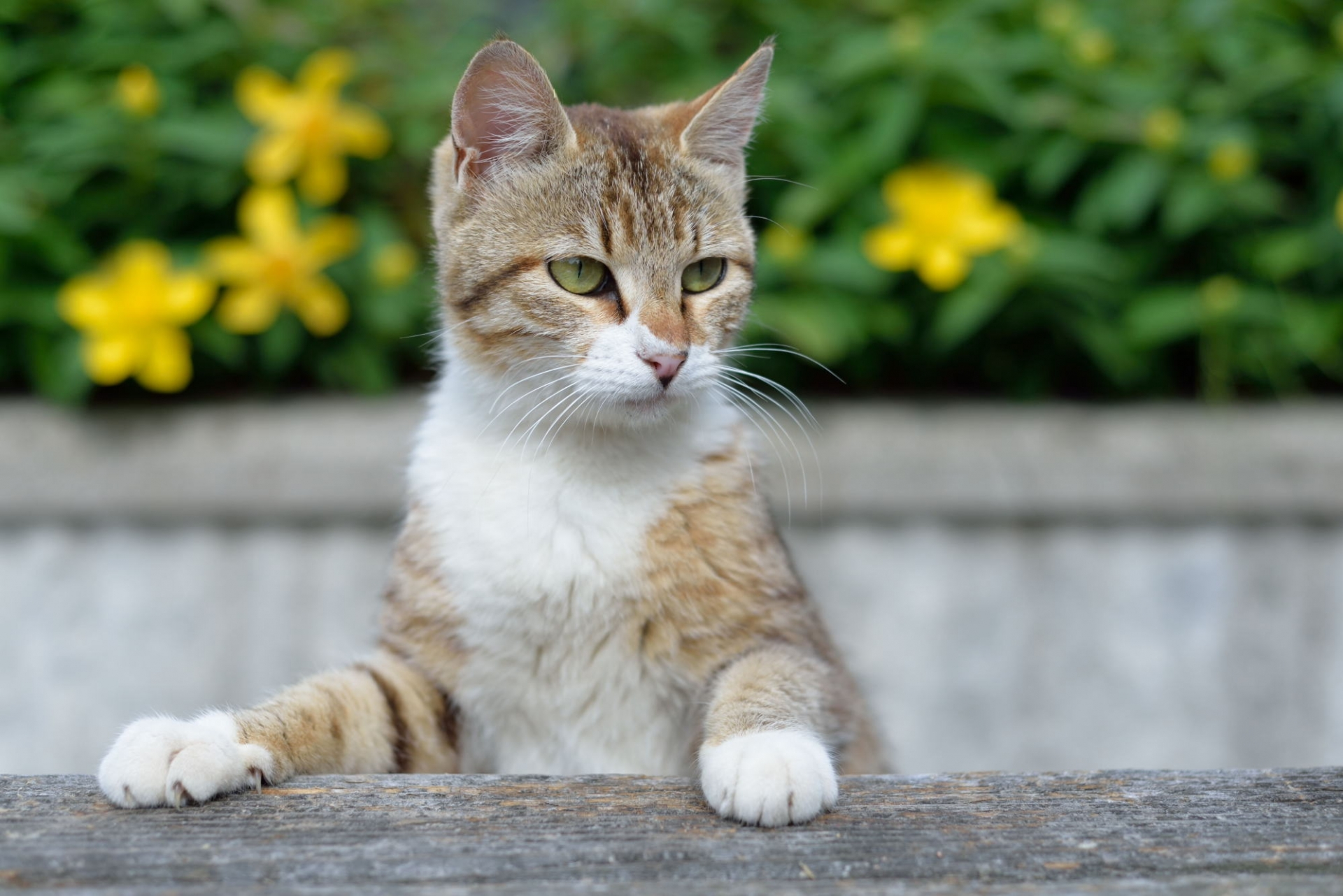 猫よけグッズで野良猫対策
